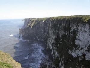 Bempton Cliffs (Foto: G. Herber-Busch)
