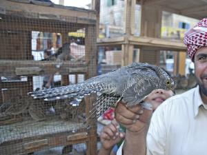 Vogelfänger mit Kuckuck (Foto: J.-U. Heins)